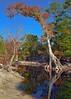 Okeefenokee Swamp, Georgia --