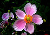 Natures glory - flowers! --