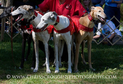 The Dancing Greyhounds