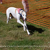 Greyhound Sprinting Contest