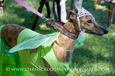 Greyhound Costume Contest