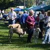 Greyhound Pets of America, Md. Reunion