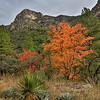 McKittrick Canyon is in the northern part of the park and contains some of the best fall colors in all of Texas. Much of that color comes from Big Tooth Maples.