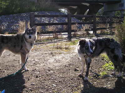 Tika and Boost would really like to get moving.