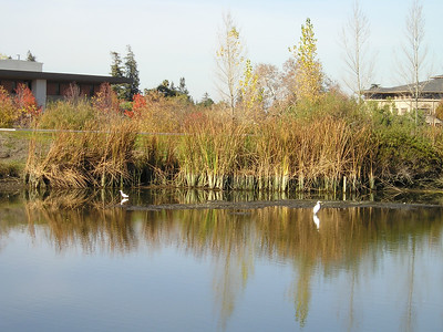 Every direction I looked--egrets.