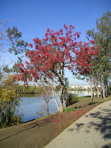A beautiful red tree by the lake caught my eye.