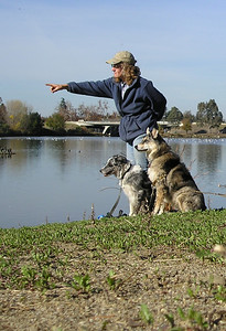 """It amazes me that one can point and say """"what's that over there?""""--and the dogs will look."""
