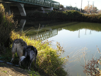 The Guadalupe River flows under Highway 87. Tika and Boost check out the underbrush.