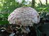 fungus Montville SPP 280908 1444 RLLord smg