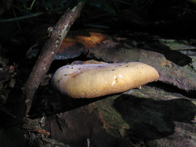 fungus St Saviour reservoir 081008 2000 RLLord smg