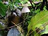 mushroom cap St Saviour reservoir walk 061008 1813 RLLord smg