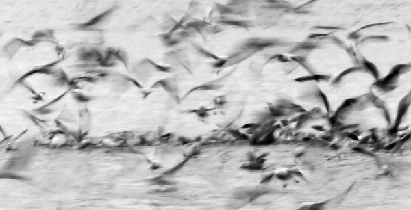 Gull Abstracts