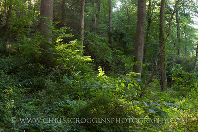 Trail in late Afternoon. Gunpowder Falls State Park