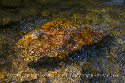 Submerged Rock in Bee Tree Run. Gunpowder Falls State Park, Md.