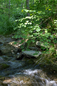 Sunlit Stream, Gunpowder Falls State Park.  Hereford, Maryland