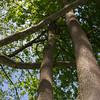 Tree Hugger.<br /> Gunpowder Falls State Park.<br /> Baltimore County, Maryland.