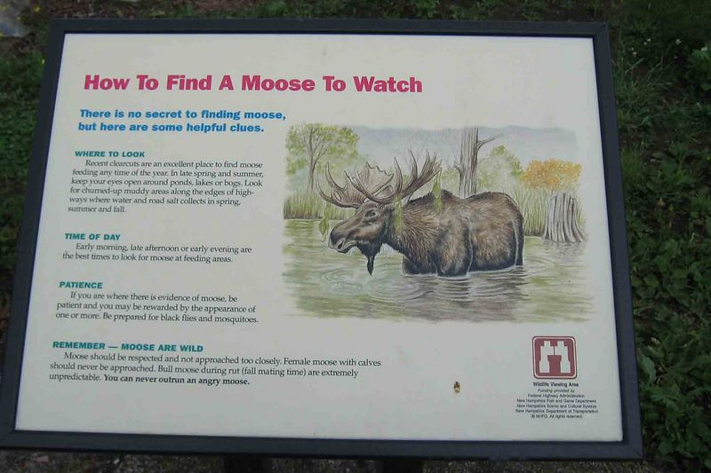 moose sign-w