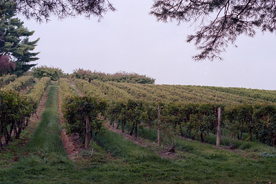 Vignoble, Niagara-on-the-Lake