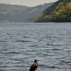 Cormorant and Lake Ashi