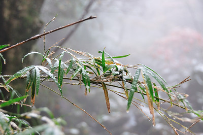 Hakone in Snow
