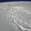 Ut frå spora i snøen, ørn, hare og rev. Ørna tar hare og reven kjem seinare og et opp restana. 08.02.2013