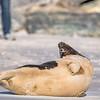 Seal on the beach-056