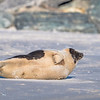 Seal on the beach-050