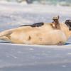 Seal on the beach-026
