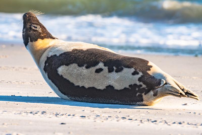 Seal on the beach-082