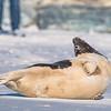Seal on the beach-055