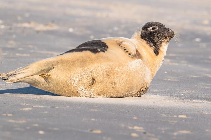 Seal on the beach-002