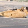 Seal on the beach-023