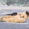Seal on the beach-048