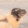 Seal on the beach-119