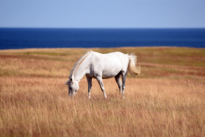 Häst på Ravlundafältet