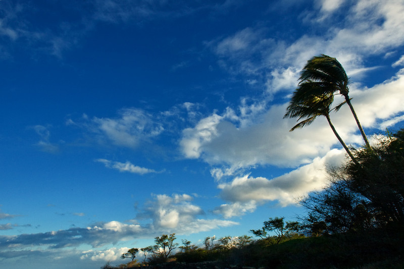 Palms and Sky, The Big Island