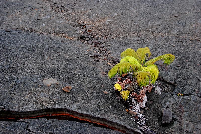 New life on former lava lake, Kilauea Iki