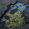 Tidal pool in lava, with coral debris (Kohala coast)