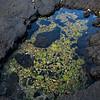 Tidal pool in lava, with coral debris (Kohala coast)