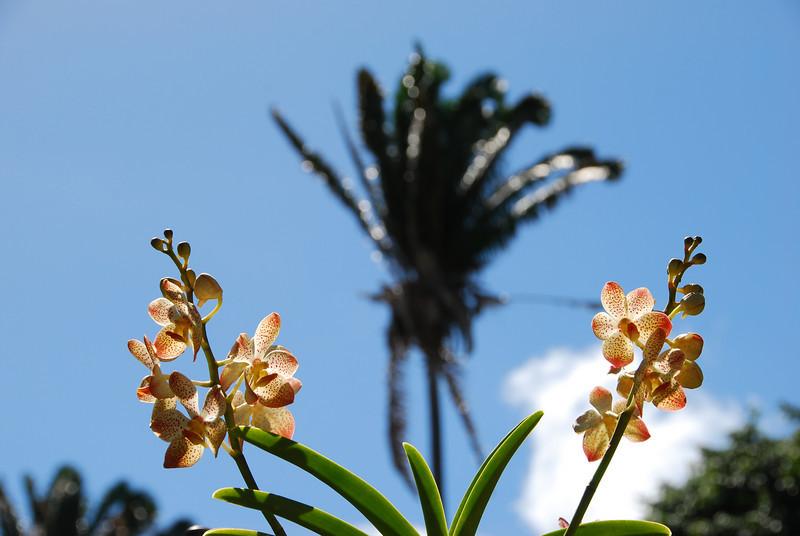 Orchids, Foster Botanical Garden, Honolulu