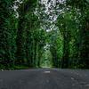 Tree_tunnel_Kauai_10-3-14_IMG_1207