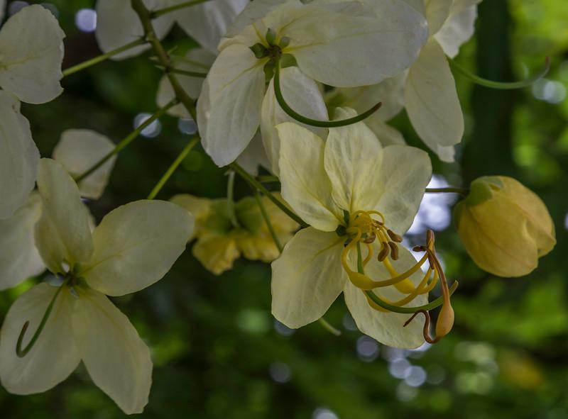 Flower_Allerton_Garden_Kauai_9-28-14_IMG_0533