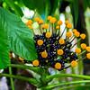 Flower_Allerton_Garden_Kauai_9-28-14_IMG_0469