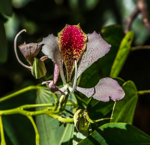 Flower_Allerton_Garden_Kauai_9-28-14_IMG_0444