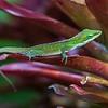 Gecko_Allerton_Garden_Kauai_9-28-14_IMG_0426