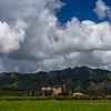 Sugarmill_Koala_Kauai_10-3-14_IMG_1226