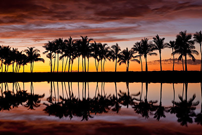 Sunset with Palm Trees Hawaii, Big Island  20090109_Abay_056