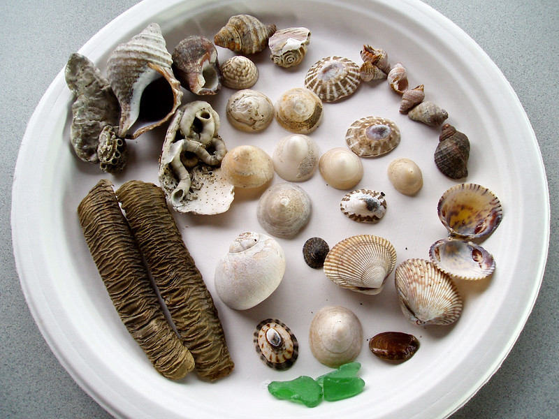 X-MARINE-A days collection of Marine invertebrates. 2006.5.6#006.2. Beach combing Homer Spit around to Bishop's Beach, Alaska. Collected by Mary Lou Boughton.