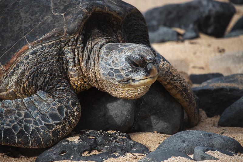 Sea Turtle Drool