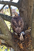 hawk having a snack